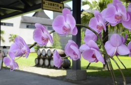 galerie-distillerie-fleurs04